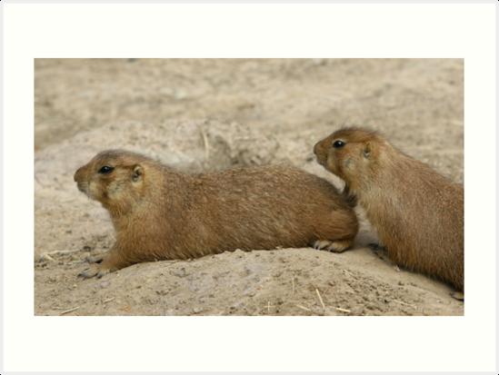Cute Playful Marmot by christopherliao