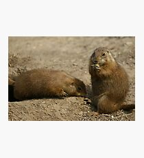 Cute Playful Groundhog Photographic Print