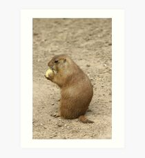 Marmots Acting Cute Art Print