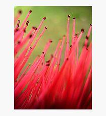 nature brush Photographic Print