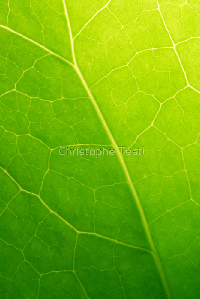 Green by Christophe Testi