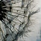 The Dandelion Silhouette by PictureNZ
