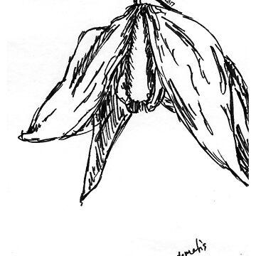 Clematis Sketch by JuliaDream