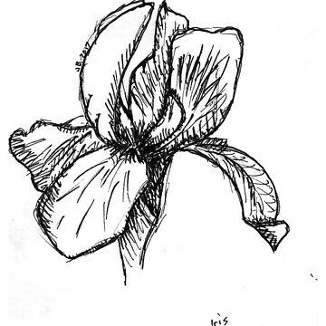 Iris Sketch by JuliaDream