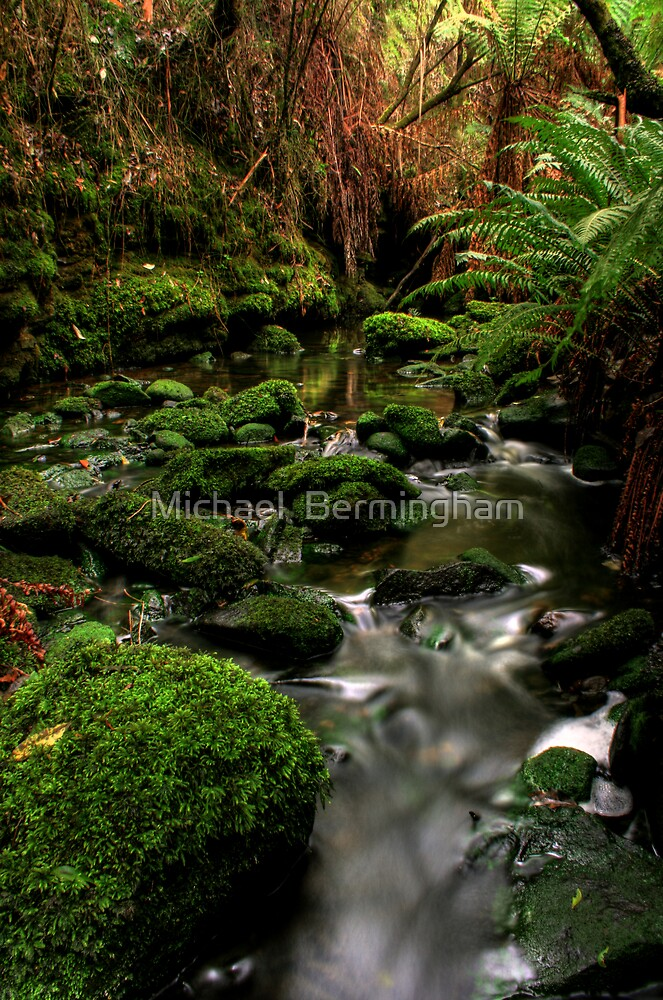 Tranquil by Michael  Bermingham