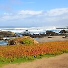Glass Beach at Fort Bragg by penneyknightly