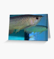 Like a Fish in Water - Kuala Lumpur, Malaysia. Greeting Card