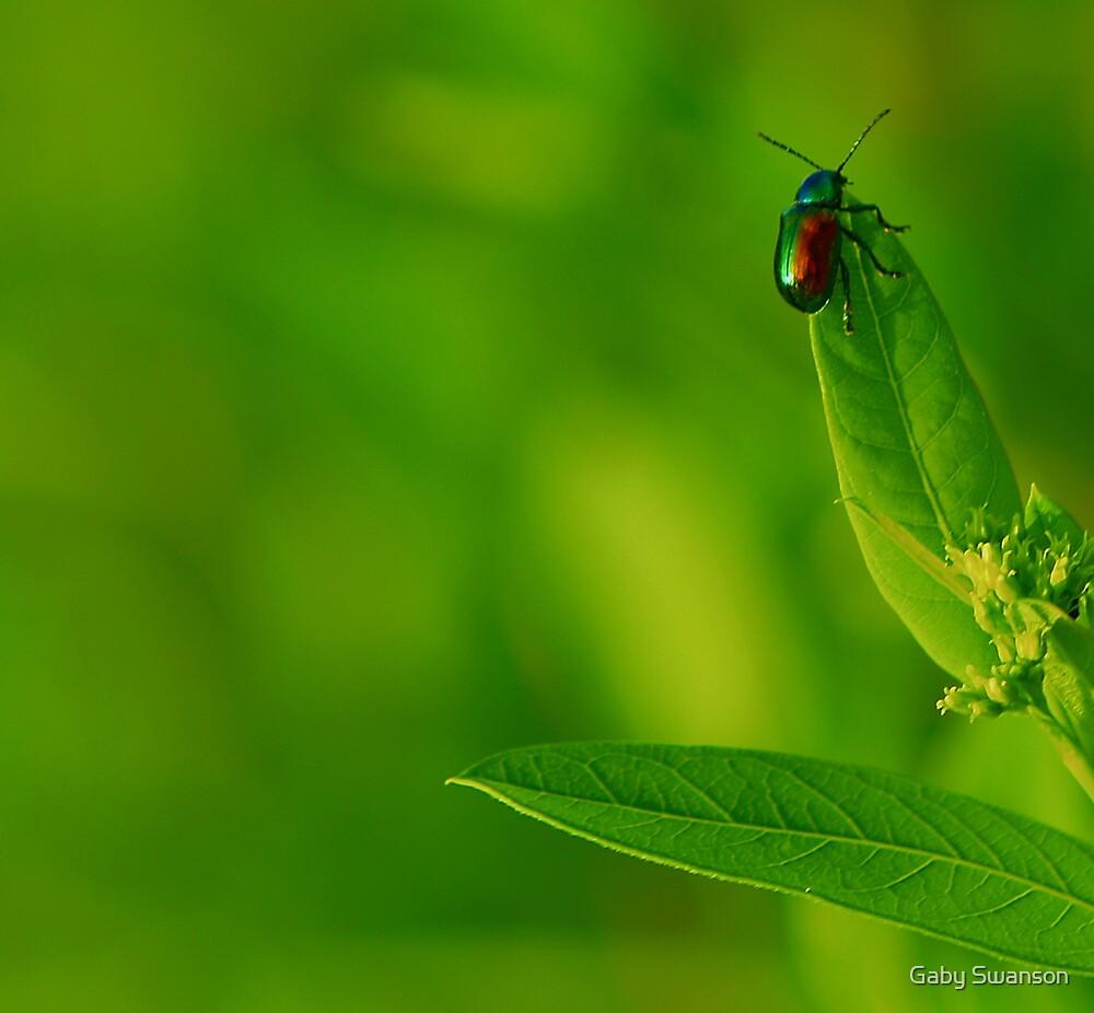 little bug by Gaby Swanson