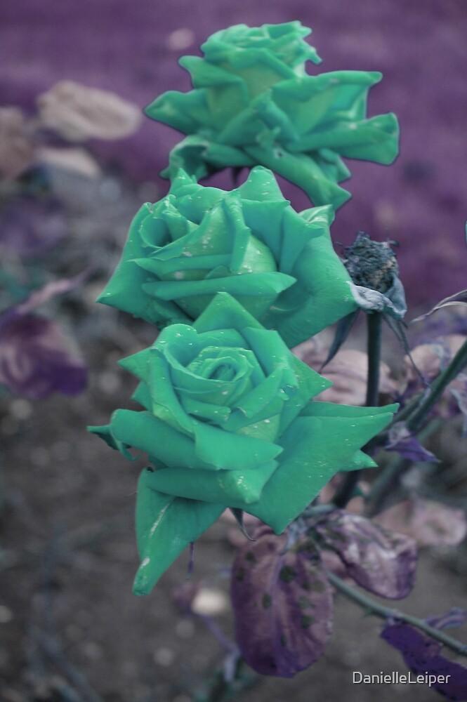 greenest rose by DanielleLeiper