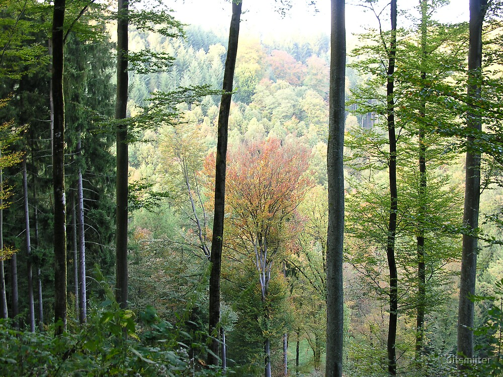 Autumn Colours in the Snow Eifel forest by uitsmijter