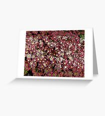 Comic Abstract Pink Flowers Greeting Card