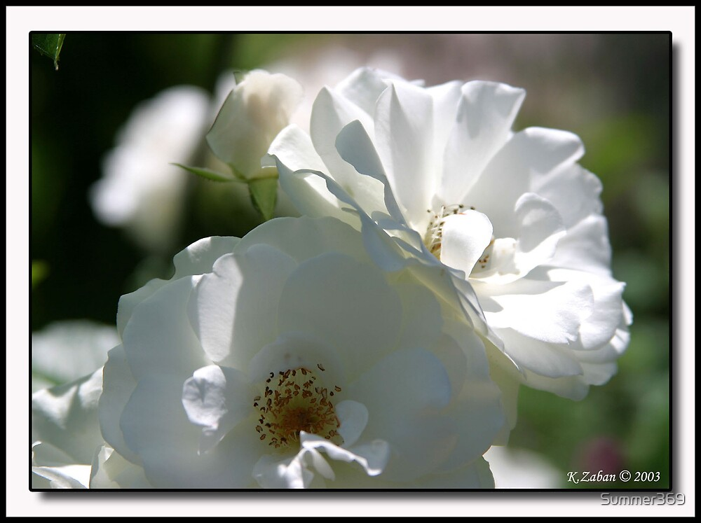 White Flowers by Summer369