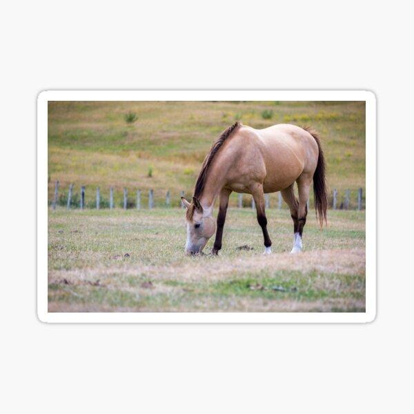 Buckskin Horse Sticker