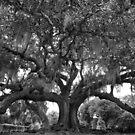 Tree of Life (B&W) - New Orleans, LA by Daniel  Rarela