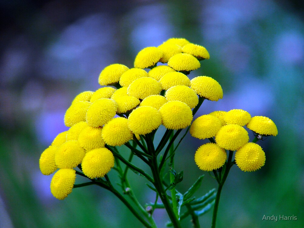 Yellow Burst.... by Andy Harris