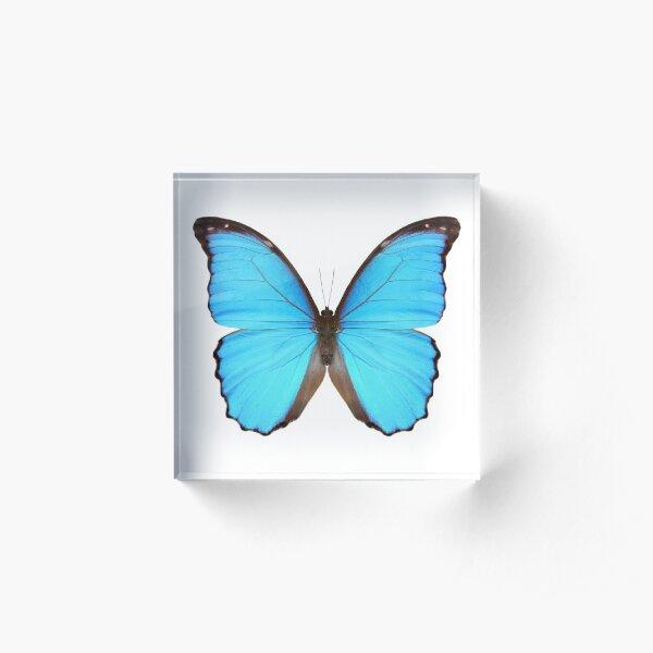 Blue Morpho Butterfly Acrylic Block