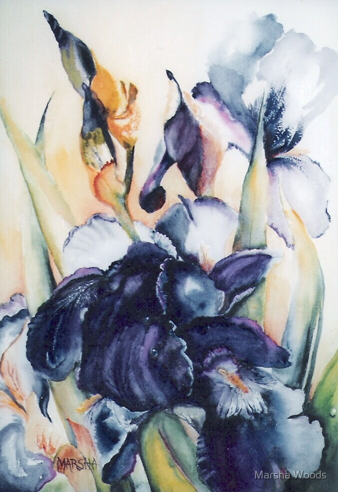 Purple Iris by Marsha Woods