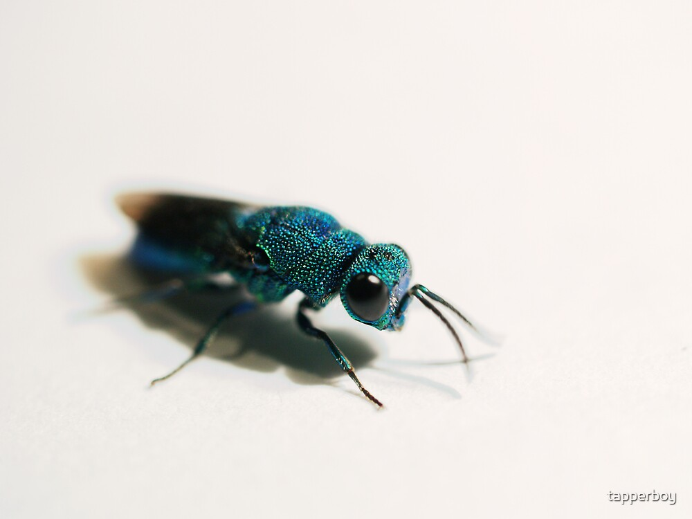 Cuckoo Wasp II by tapperboy