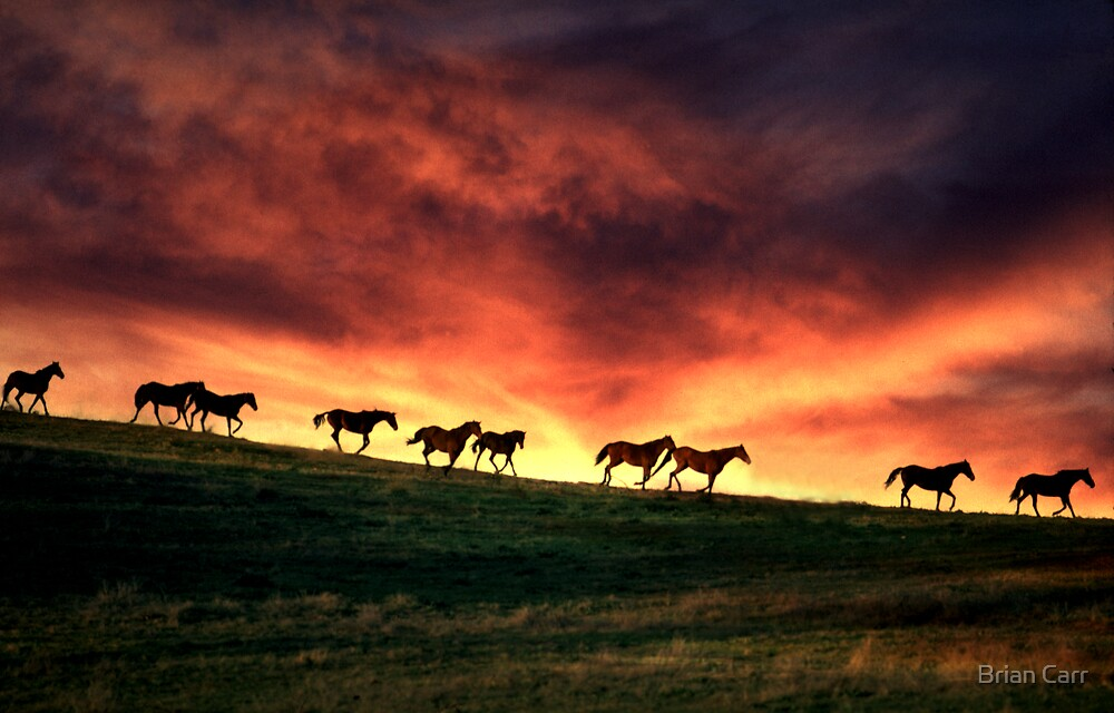Horses on horizon by Brian Carr