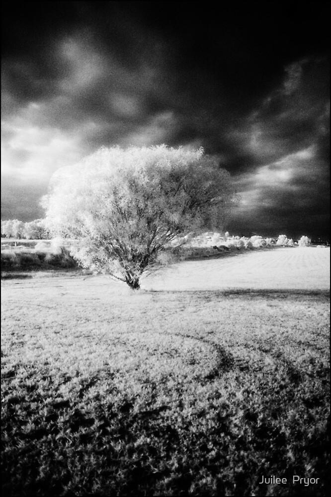 bush by Juilee  Pryor