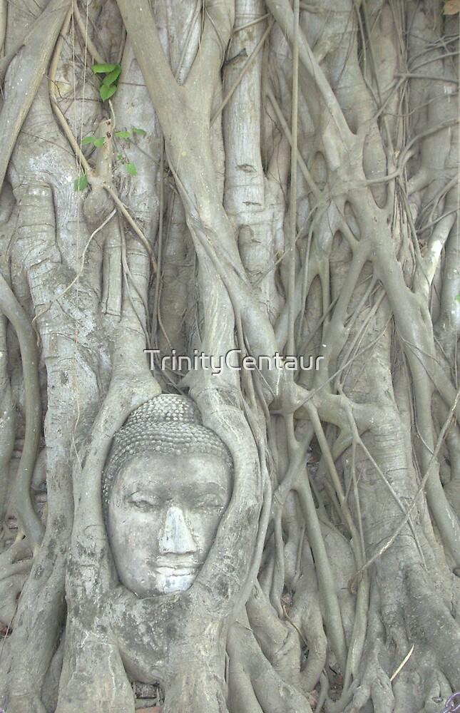 Ayuttaya - Buddha in Tree by TrinityCentaur