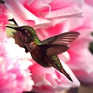 HUMMER IN THE PINK...... by RoseMarie747