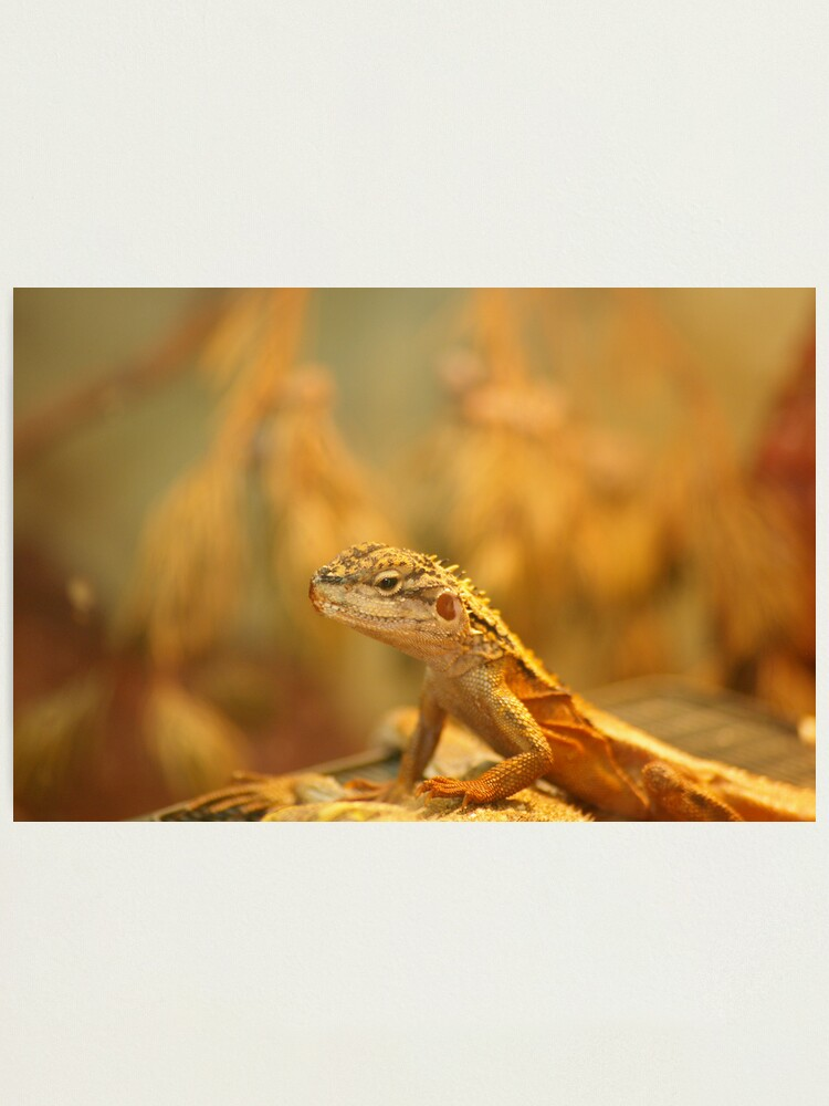 Alternate view of Dragon on watch Photographic Print