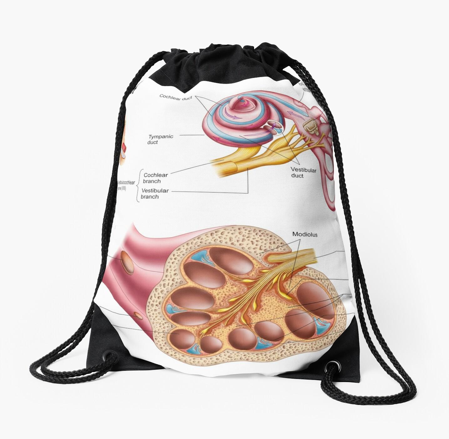 Mochilas de cuerdas «Anatomía del conducto coclear en el oído humano ...