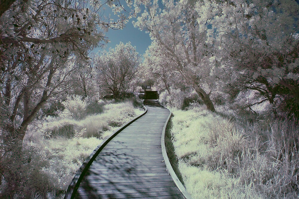 Winding path in false-colour IR by Trent Wallis