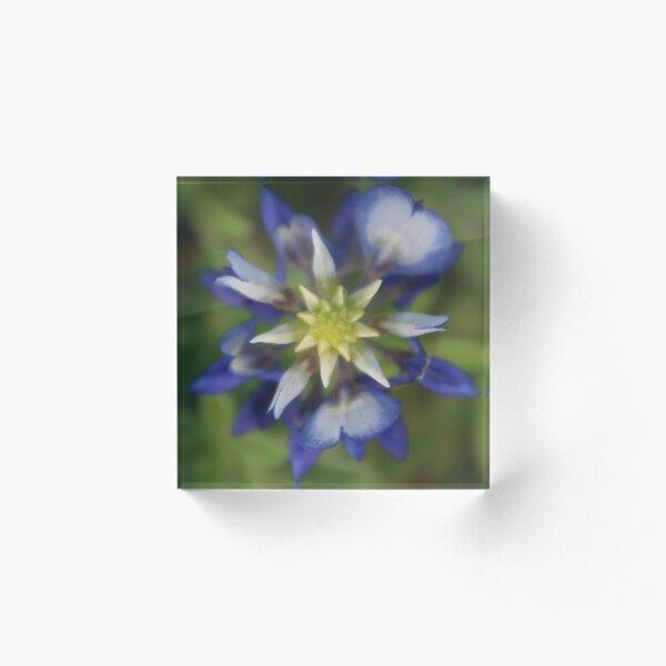 Texas Bluebonnet Acrylic Block