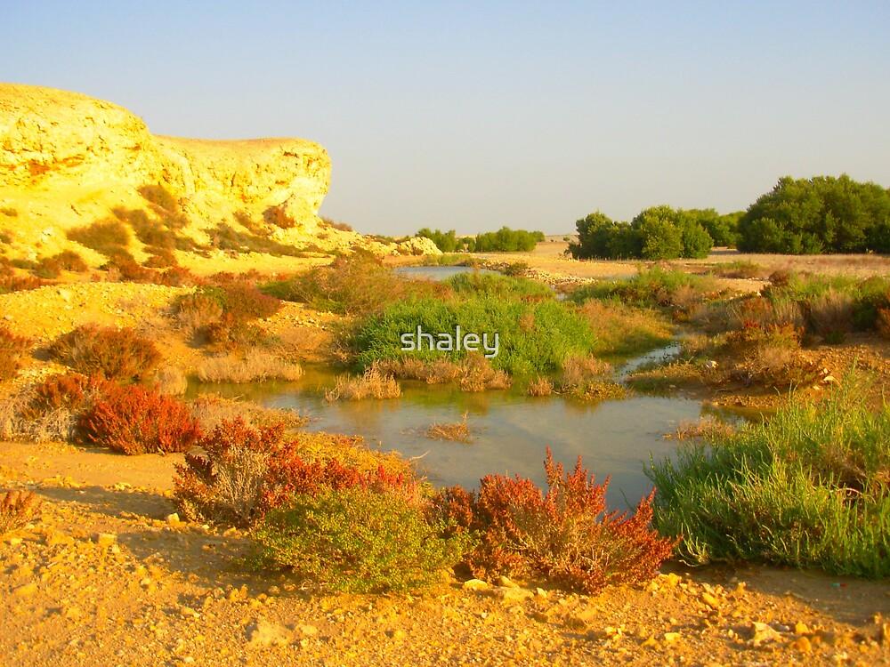 Desert Garden by shaley