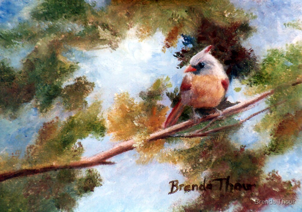 Baby Cardinal by Brenda Thour