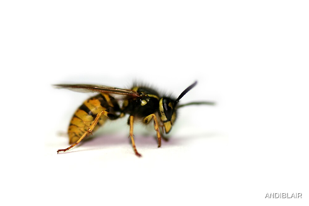WASP 1 by ANDIBLAIR