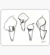 Study to lilies calla II Sticker