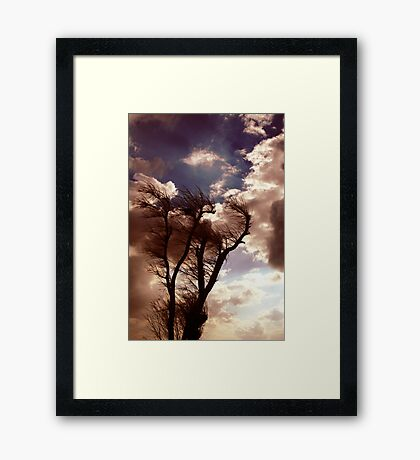 Windtree Framed Print