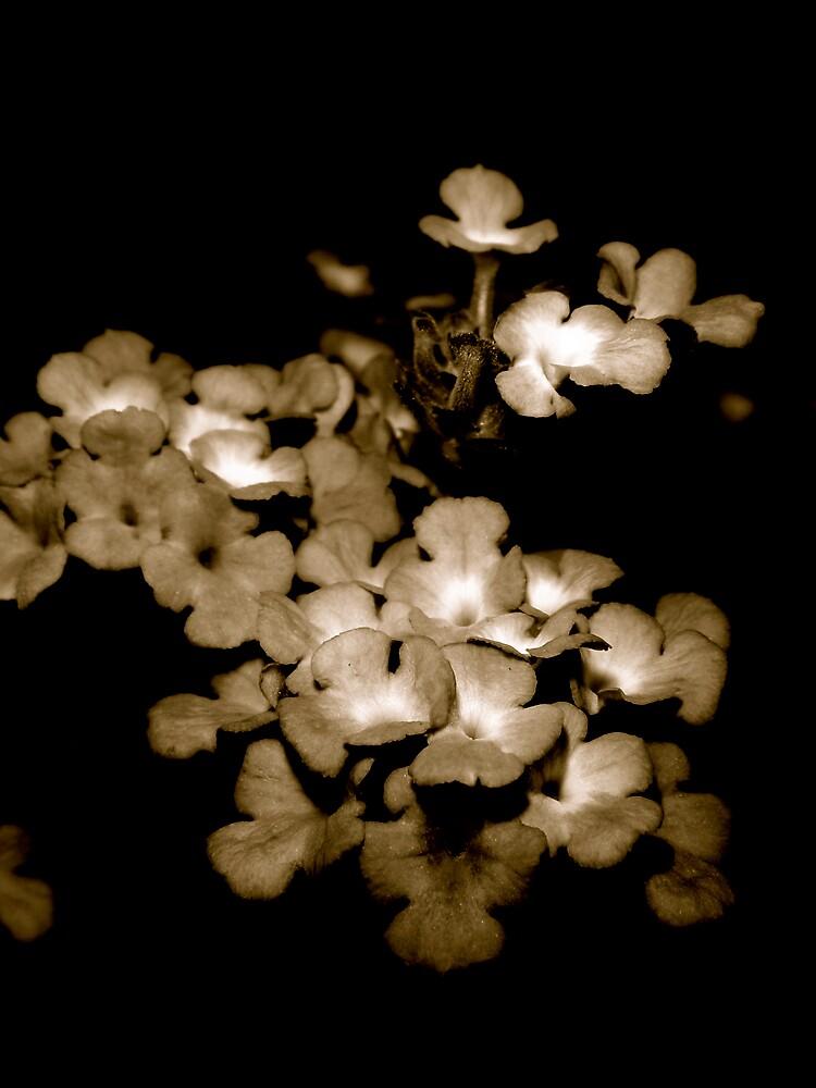 Bobbing in the light by diongillard