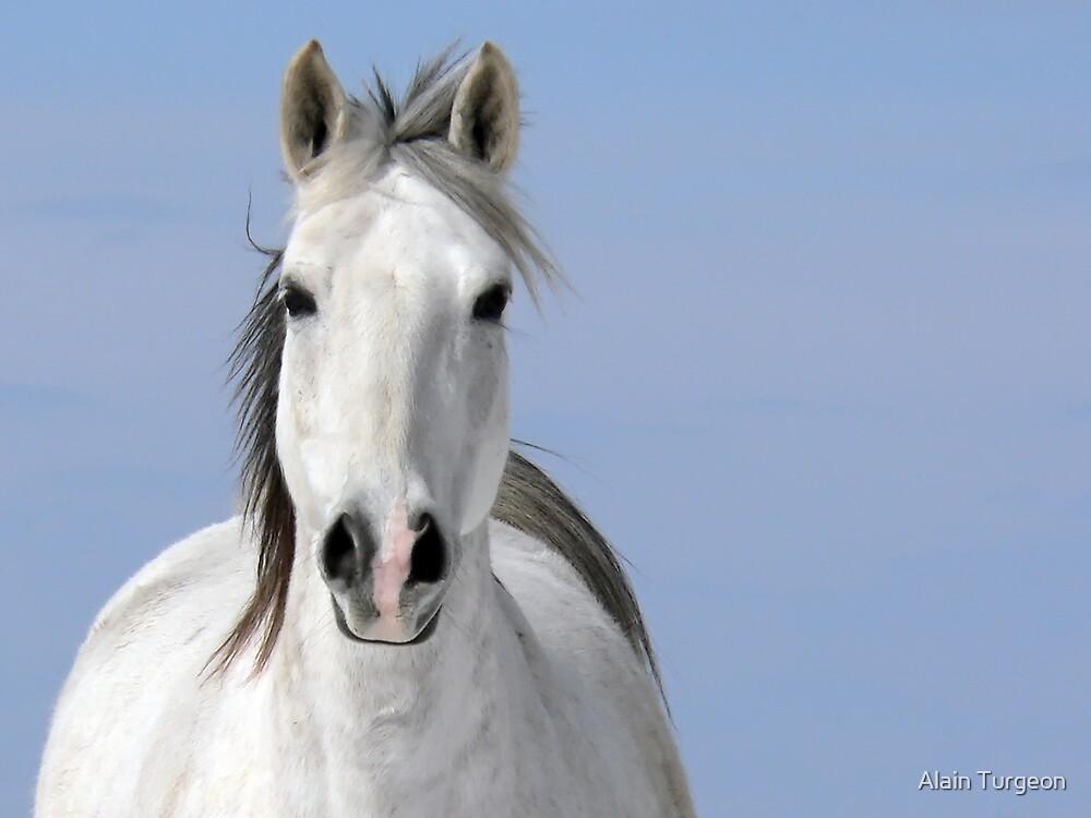 Pale Rider by Alain Turgeon