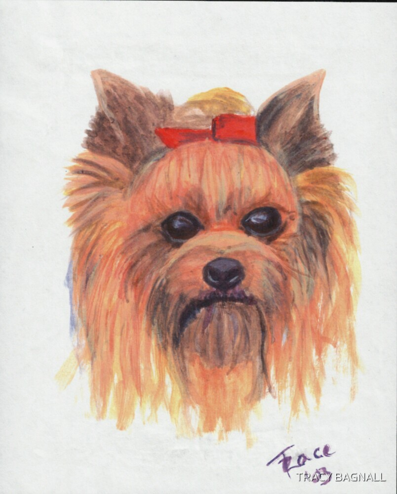 Yorkie by TRACY BAGNALL