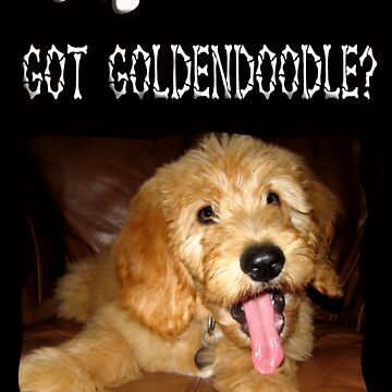 Riley---Golden-Doodle by quin10