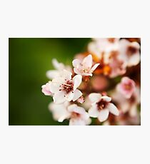 Macro flowers, floral, nature photography Photographic Print