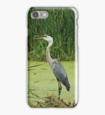 Great Blue Heron Standing iPhone Case/Skin