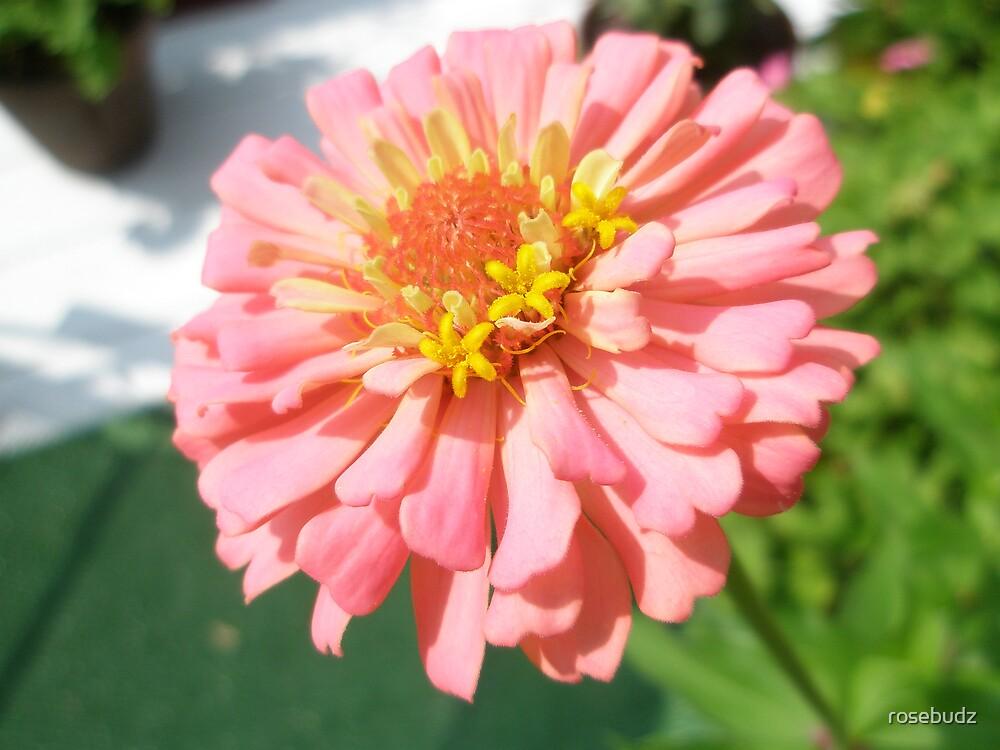 lucky zinnia by rosebudz