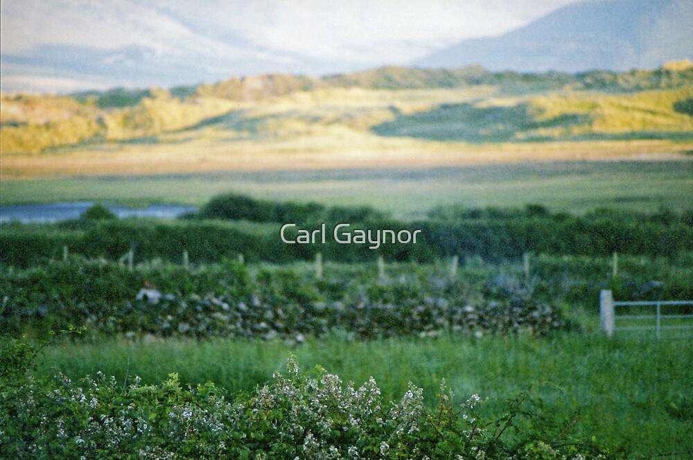 Inch by Inch  by Carl Gaynor