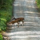 Deer Crossing by Sherri Hamilton