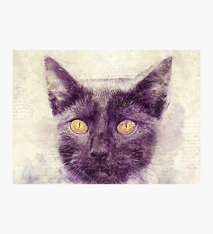 Black kitty art Photographic Print