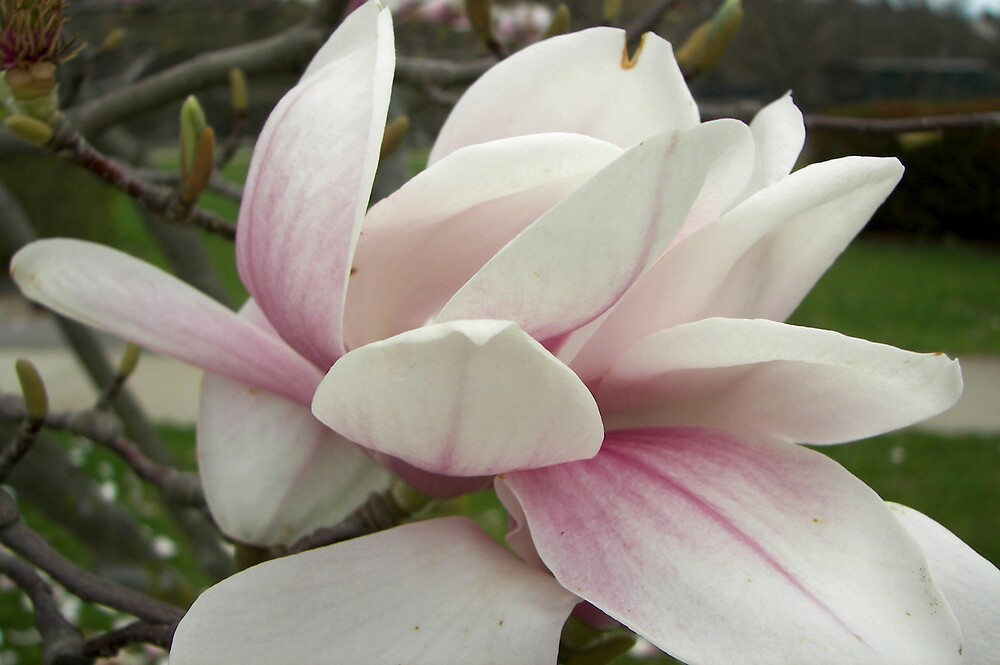 Summer Flower by YourSuccess