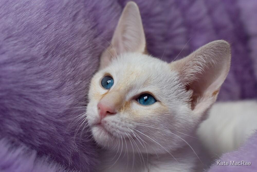 Comfy Kitten by Kate MacRae