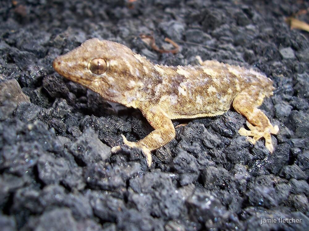 no tail lizard by jamie fletcher