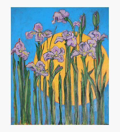 The Sun and Wild Irises Photographic Print