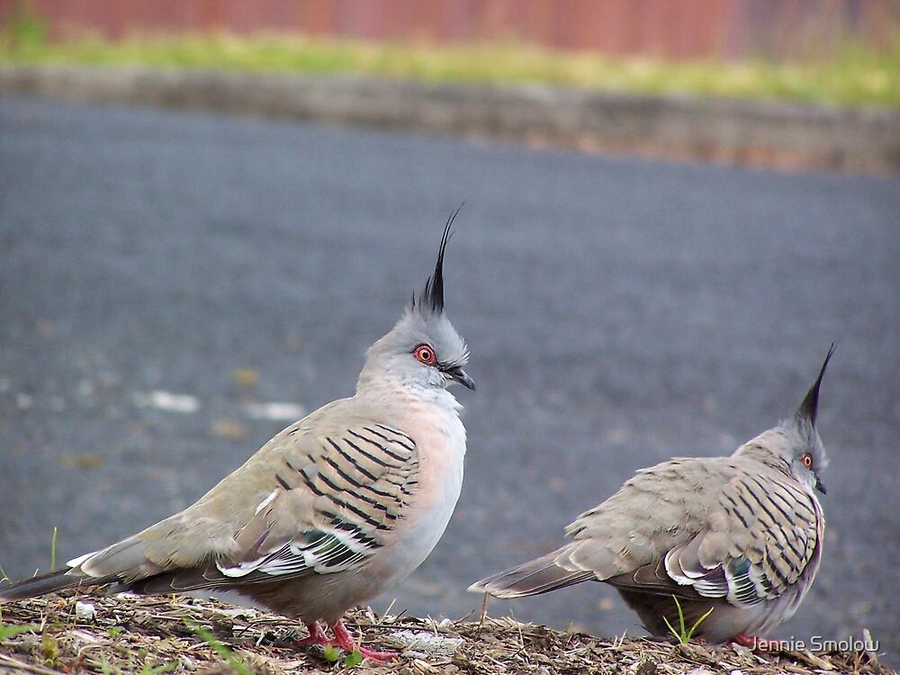 Australian Crested Pigeon by Jennie Smolow